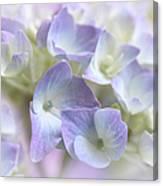 Hydrangea Floral Macro Canvas Print