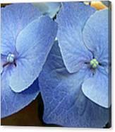 Hydrangea Flower Set Canvas Print