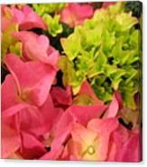 Hydrangea Joy Canvas Print