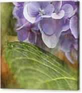 Hydrangea Portrait Canvas Print