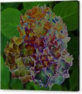 Hydrangea Solorized Canvas Print
