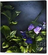 Hydrangea Violet-blue Canvas Print