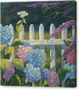 Hydrangeas Fence Canvas Print