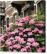 Hydrangeas In Holland Canvas Print