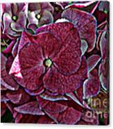 Hydrangeas In Rich Rose Color Canvas Print