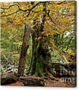 I Am Here Since Almost 1000 Years Canvas Print