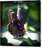 I Butterfly Canvas Print