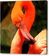I Can Count To 8 - Flamingo Canvas Print