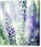 I Dream In Lavender Canvas Print