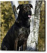 I Have Been Such A Good Dog Canvas Print