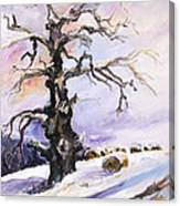 I Have Got Stories To Tell Old Oak Tree In Mecklenburg Germany Canvas Print
