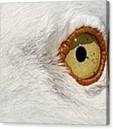 I Have My Eye On You Canvas Print