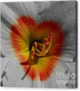 I Heart Flowers Canvas Print