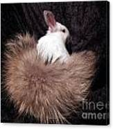 I Just Love My New Tail Canvas Print