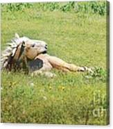 I Need A Tan  Horse Canvas Print
