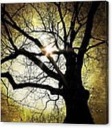 I Think I Shall Never See A Poem As Lovely As A Tree... Canvas Print