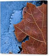 Ice And Life Canvas Print