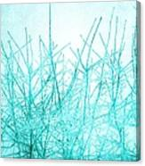 Ice Branches Canvas Print