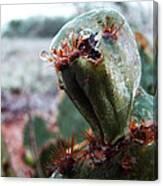 Ice Cactus Canvas Print