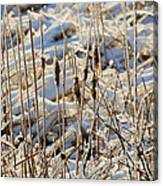 Ice Coated Bullrushes Canvas Print
