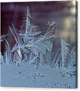 Ice Crystals Of Winter Canvas Print
