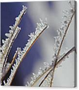 Ice Crystals On Fireweed Fairbanks  Alaska By Pat Hathaway 1969 Canvas Print