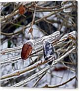 Ice Incased Leaves Canvas Print