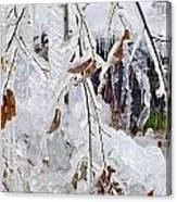 Ice Leaves Canvas Print