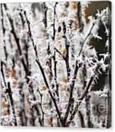 Ice On Thornes Canvas Print