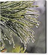 Ice Storm Remnants Vll Canvas Print