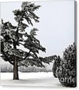 Ice Storm Scenery Canvas Print