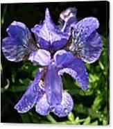 Iced Iris Canvas Print