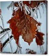 Iced Leaves Canvas Print