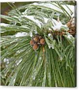 Iced Over Pine Cones Canvas Print