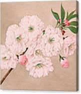 Ichi-yo - Single Leaf - Vintage Japan Watercolor Canvas Print