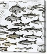 Ichthyology Canvas Print
