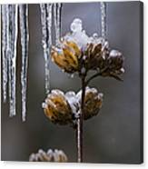 Icicles And Ice Flowers Canvas Print