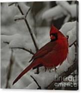 Iconic Avian Canvas Print