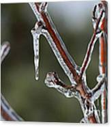 Icy Branch-7463 Canvas Print