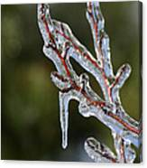 Icy Branch-7498 Canvas Print