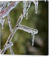 Icy Branch-7506 Canvas Print