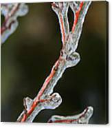 Icy Branch-7512 Canvas Print