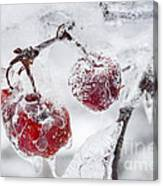 Icy Branch With Crab Apples Canvas Print