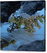 Icy Evergreen Reflection Canvas Print