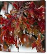 Icy Oak Canvas Print