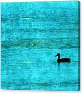 Icy Swim Canvas Print