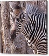 Idaho Falls - Tautphaus Park Zoo Canvas Print