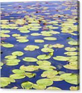 Idyllic Pond Canvas Print