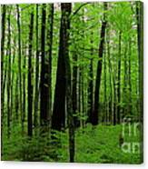 If A Tree Fell In The Forest... Canvas Print