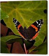 If Not A Monarch At Least A Princess Canvas Print